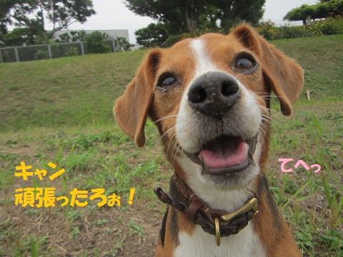 022-1_20121001165215.jpg