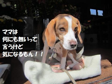022_20121023122652.jpg