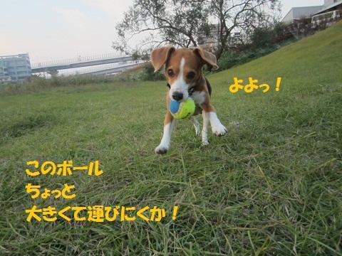 022_20121110124254.jpg