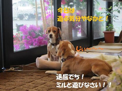023_20120713121739.jpg