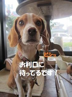 024-1_20120726135345.jpg