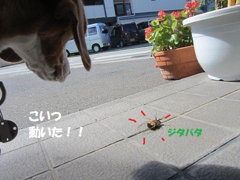 024_20120724165114.jpg