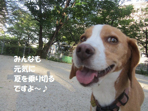 024_20120729121019.jpg