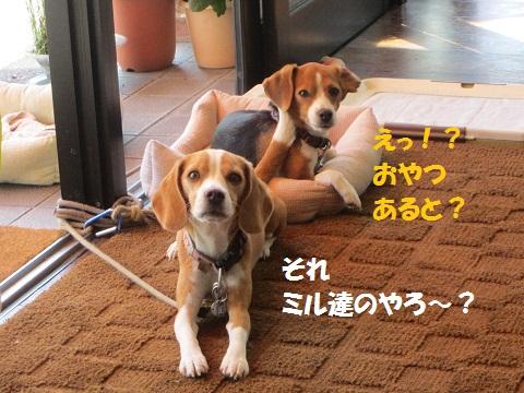 024_20120927123424.jpg