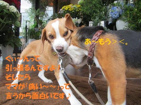 025_20120606120952.jpg