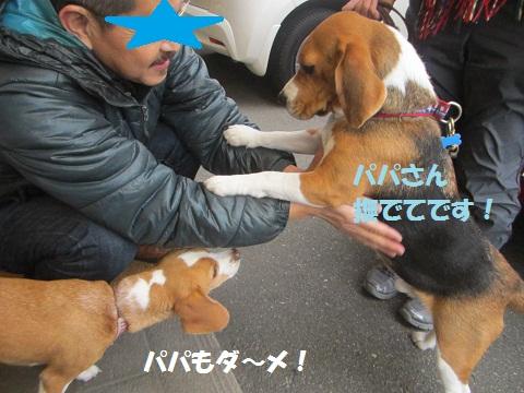 026_20121205112041.jpg