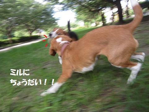 028_20120802122038.jpg