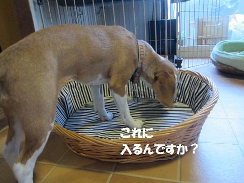 030_20120624210322.jpg
