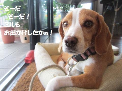 030_20120908153934.jpg