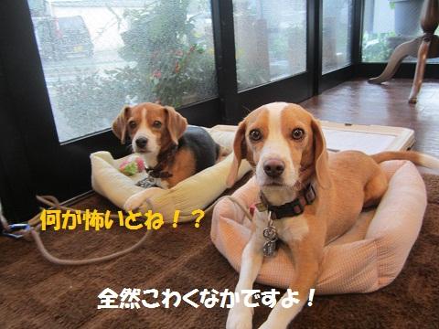 033_20120821110643.jpg