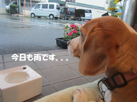036_20120704104746.jpg