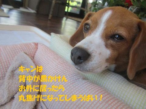 040_20120718140924.jpg