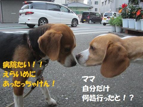 041_20120525131027.jpg