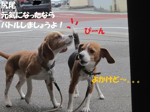 041_20120526123845.jpg