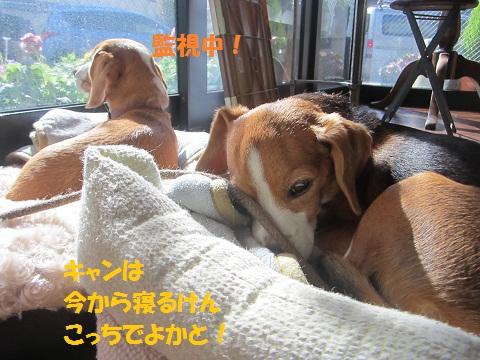 043_20121114142937.jpg