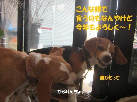 043_20121231223434.jpg