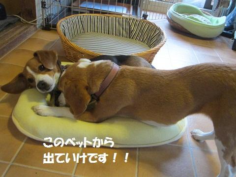 045_20120624210321.jpg
