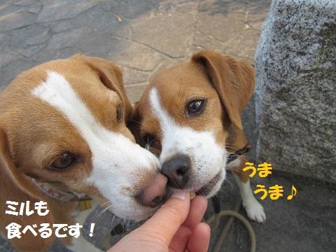 046_20120529164623.jpg