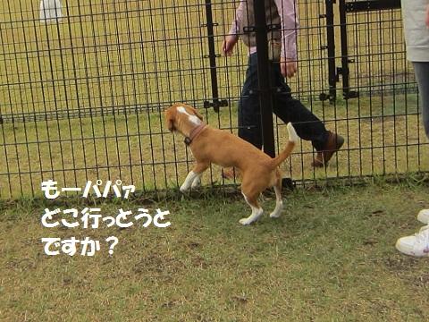 046_20121030143600.jpg