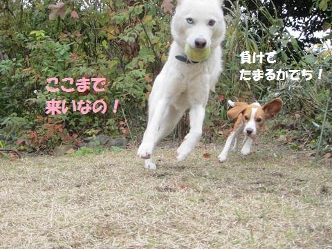 046_20121213150848.jpg