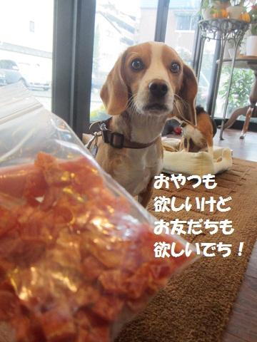 049_20121027151719.jpg