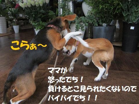052_20120606122351.jpg
