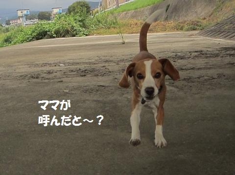 056_20121004121552.jpg