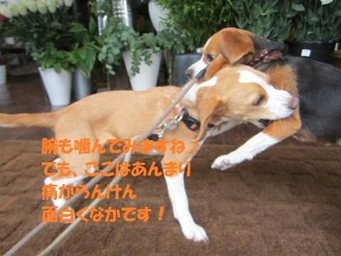058_20120606120951.jpg