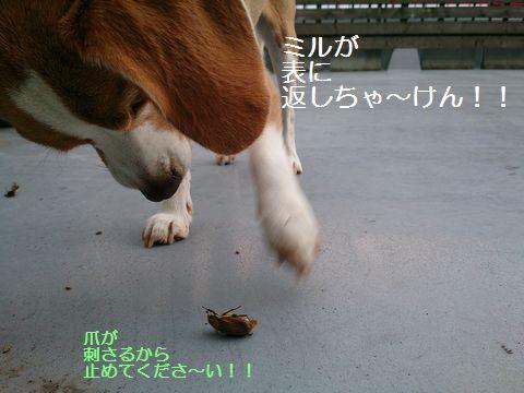 058_20130701164815.jpg