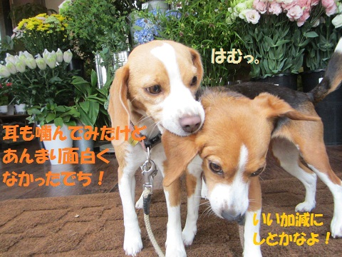 060_20120606120950.jpg