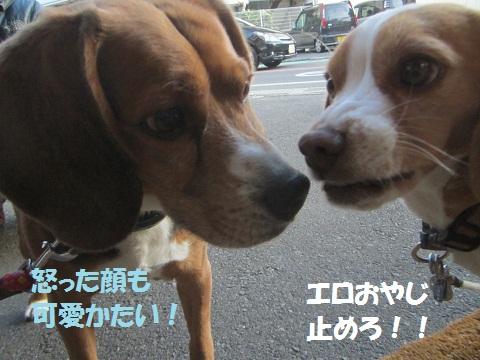 075_20121220144455.jpg