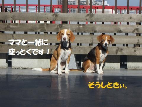 079_20121002122144.jpg