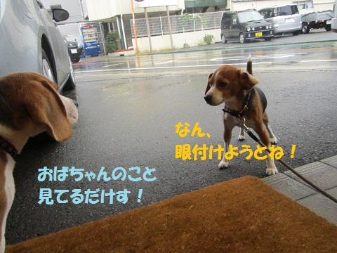 079_20121118123826.jpg