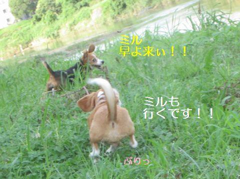080_20130707050524.jpg