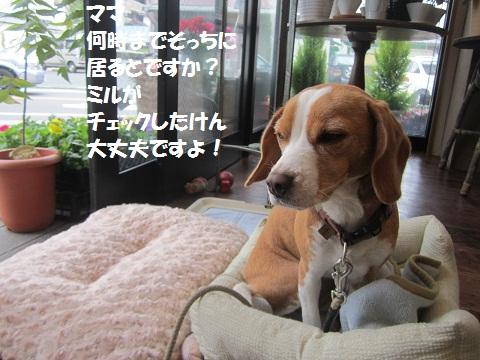 081_20121112201333.jpg