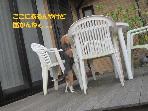 083_20121214144343.jpg
