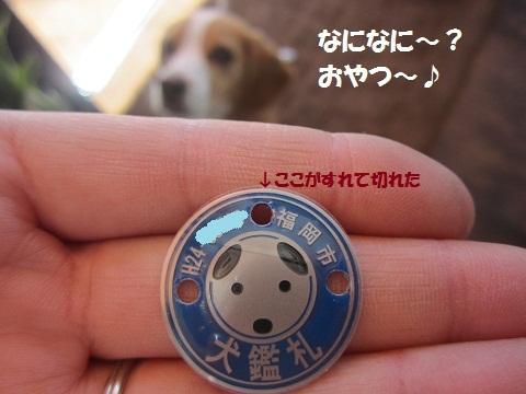 085_20121003115357.jpg