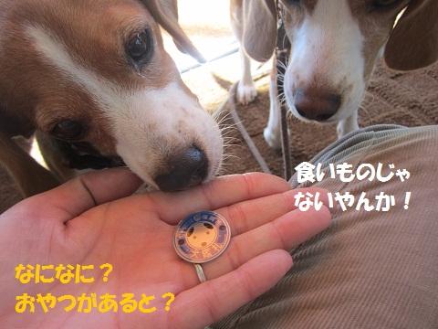 089_20121003115356.jpg