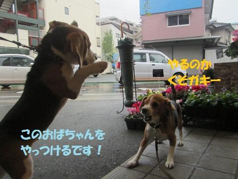 090_20121118191024.jpg