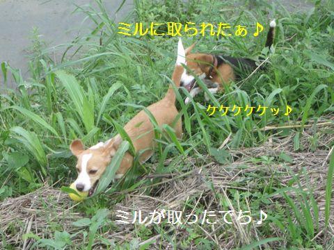091_20130707050525.jpg