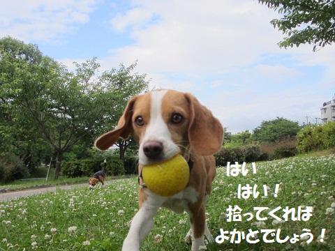 102_20120617173312.jpg