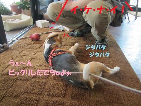 105_20120925155214.jpg