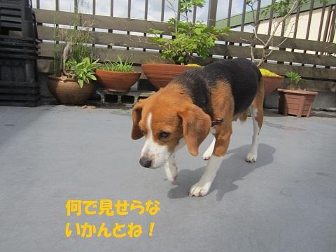110_20120613144255.jpg