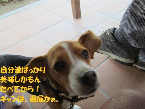 112_20120517203056.jpg