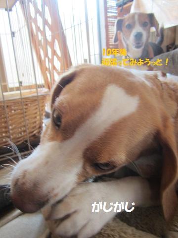 114_20120823141325.jpg