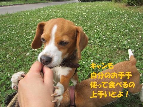 115_20120630121240.jpg