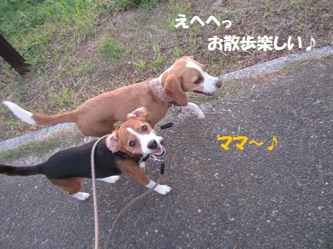 118_20120819070215.jpg