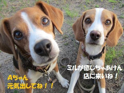119_20121013124141.jpg