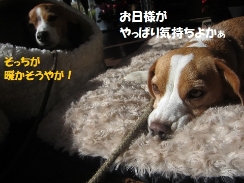 133_20121218121132.jpg