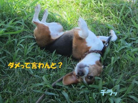 218_20120830115857.jpg